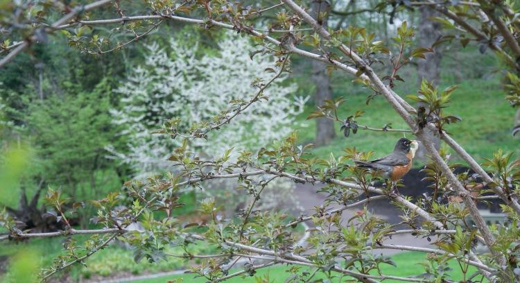 Friend in Tree
